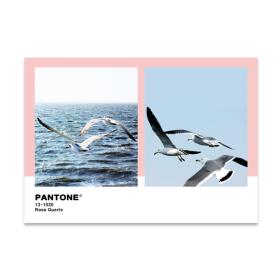 팬톤(148x210) 8장